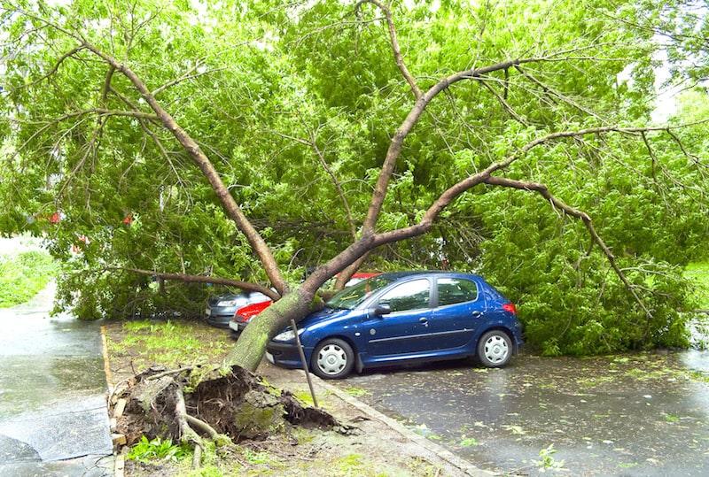 fallen tree on car anderson