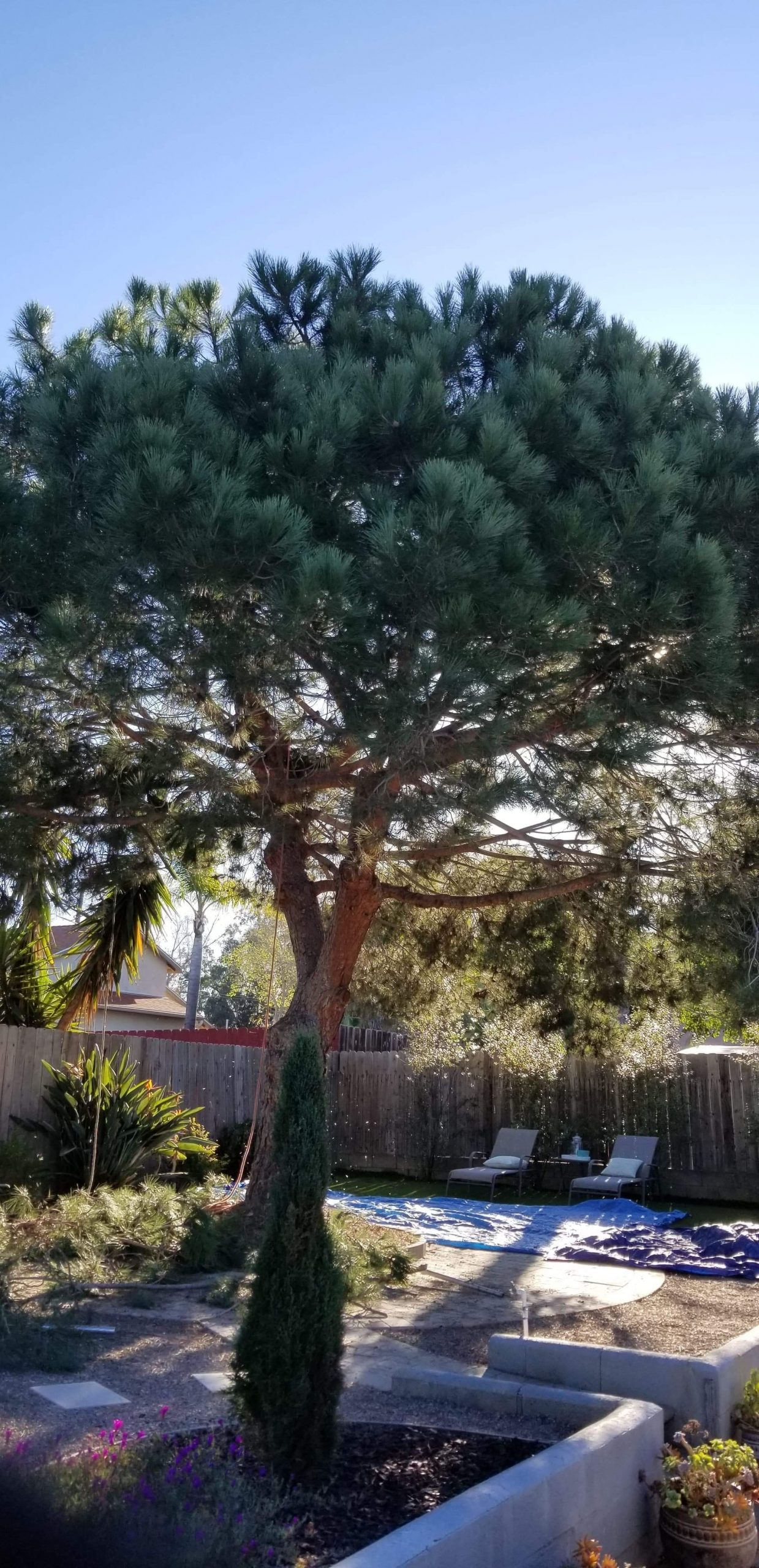 residential tree removal pine