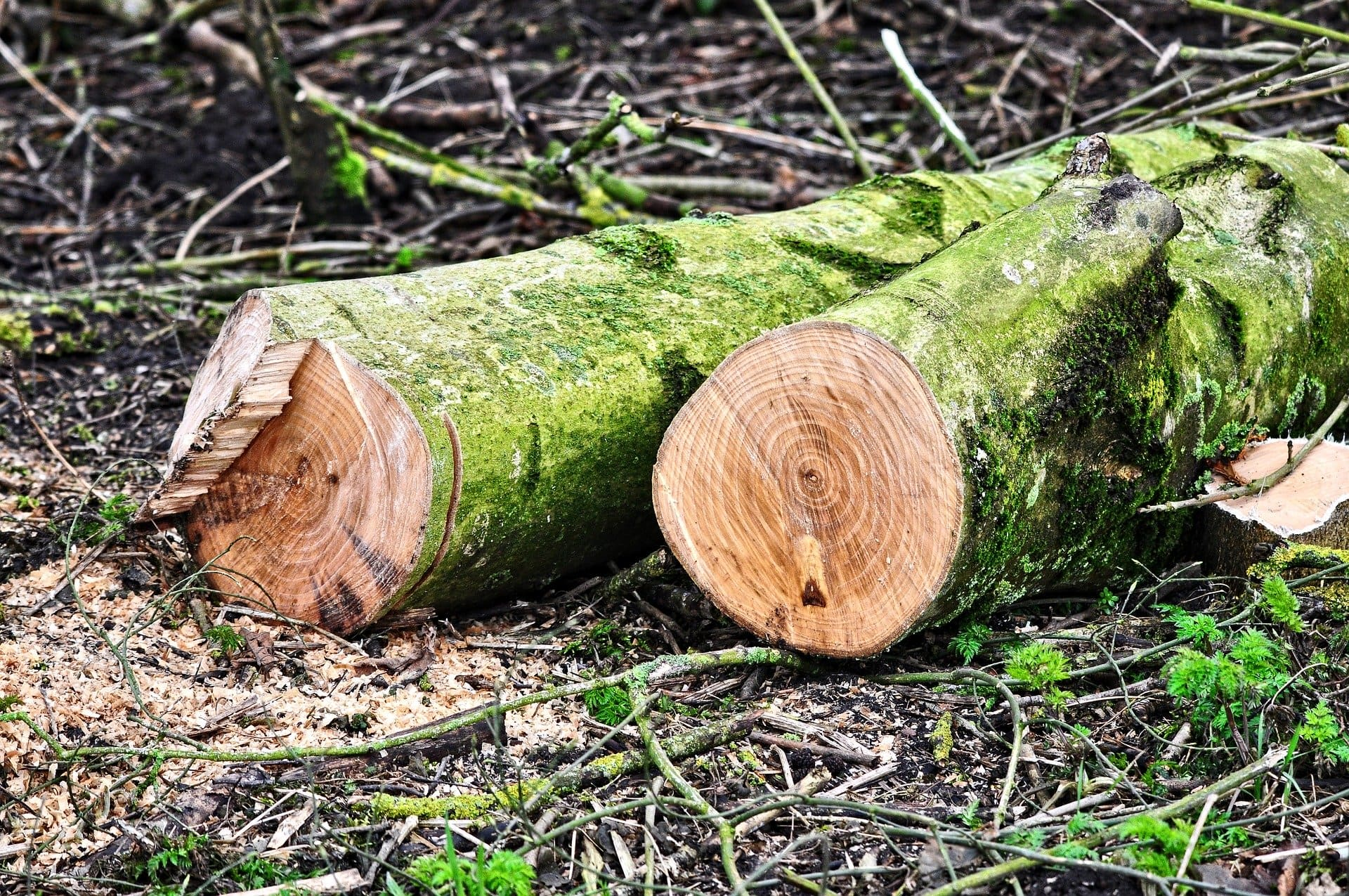 logs cut and stumps removed