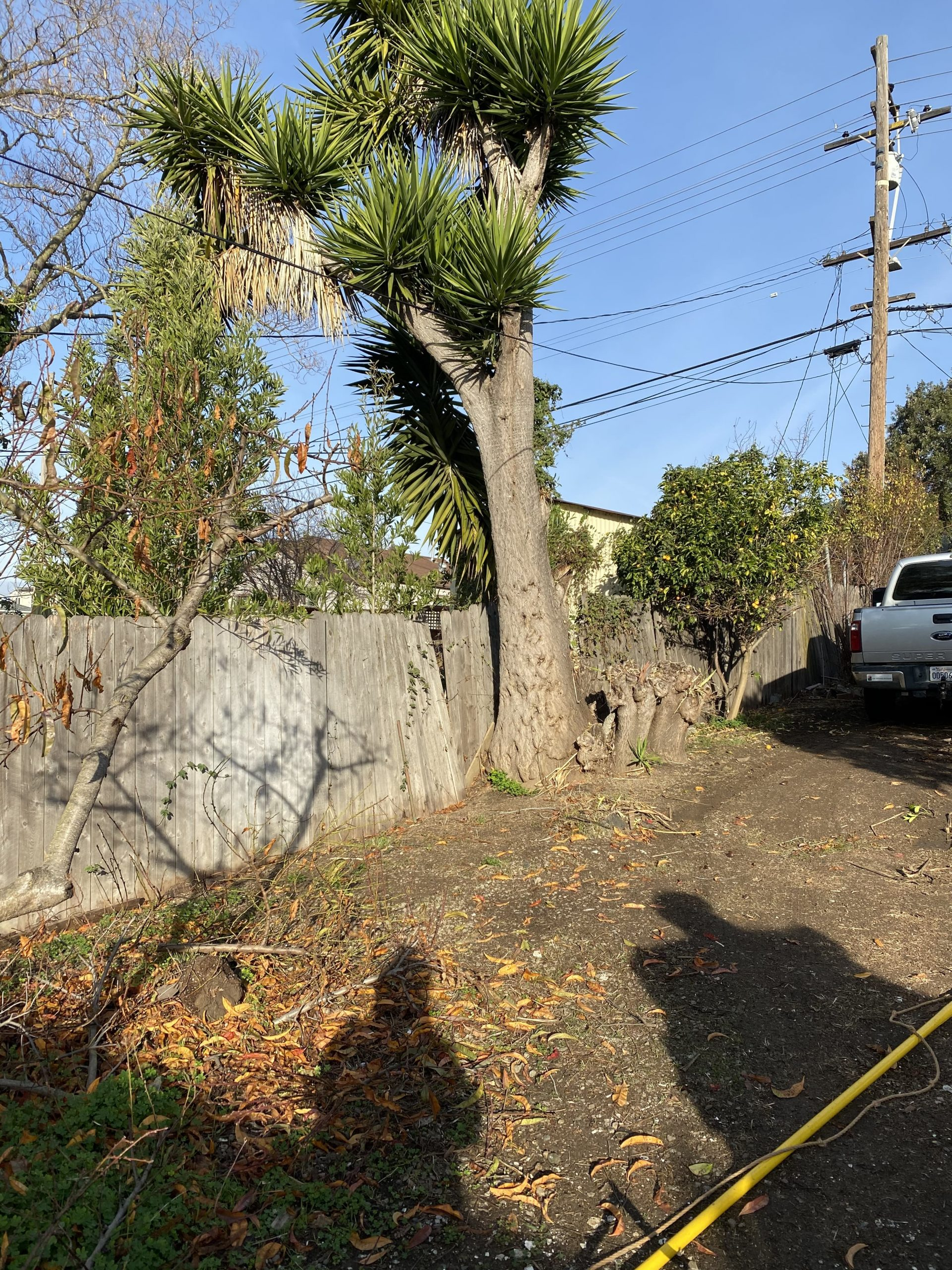 property line tree removed on fence