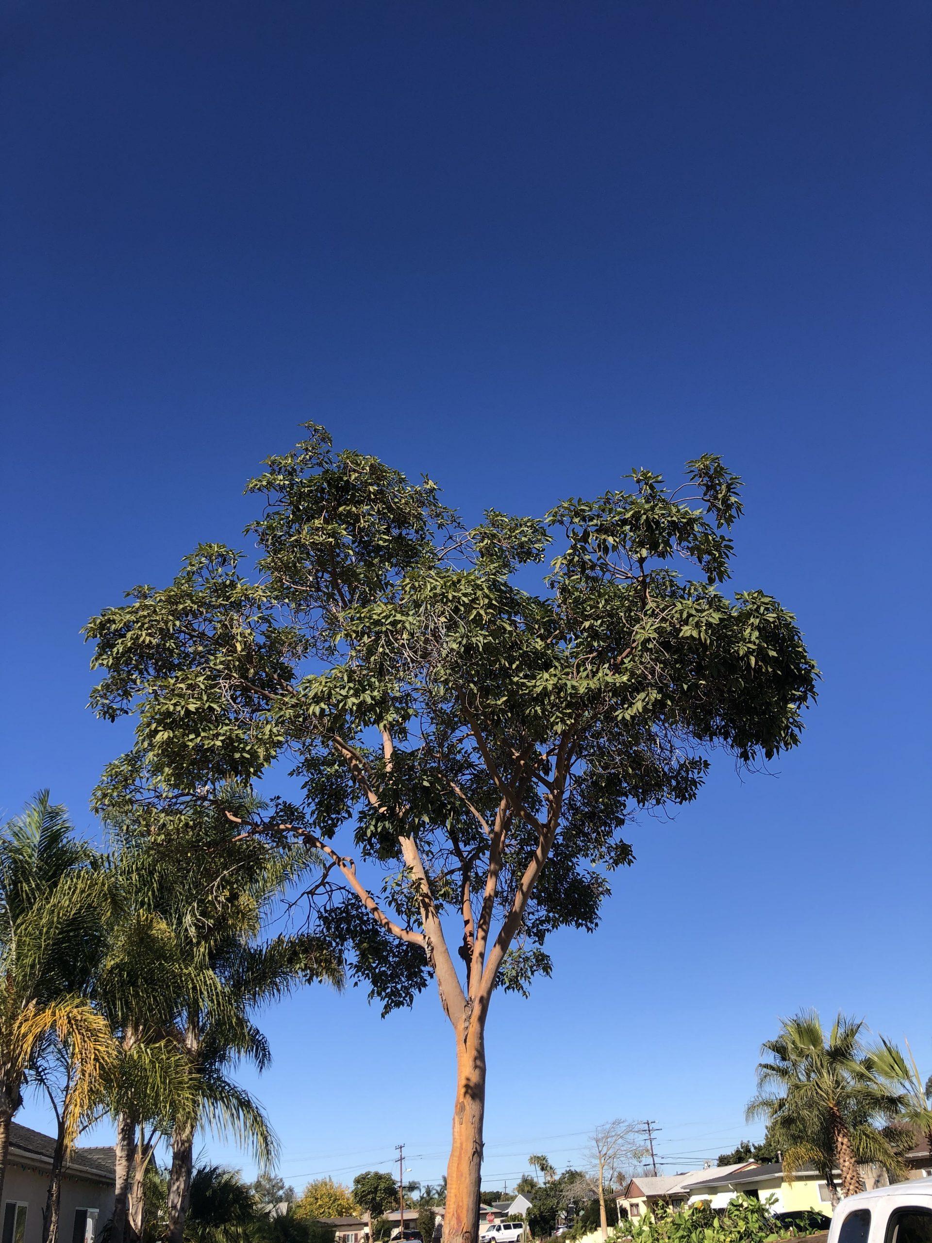 climber apex tree service
